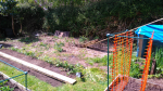 After removing raised bed